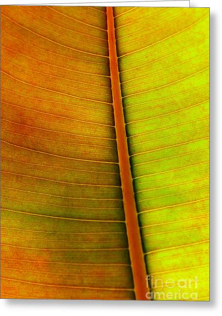 Ecology Greeting Cards - Leaf Pattern Greeting Card by Carlos Caetano