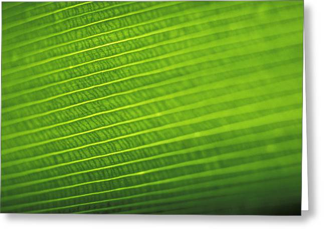 Vince Greeting Cards - Leaf Texture Greeting Card by Vince Cavataio - Printscapes