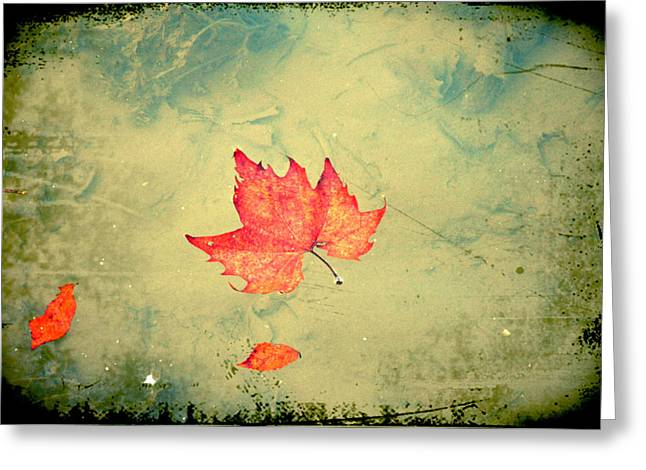 Stream Digital Art Greeting Cards - Leaf Upon the Water Greeting Card by Bill Cannon