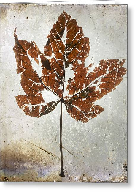 Textured Effect Greeting Cards - Leaf  with textured effect Greeting Card by Bernard Jaubert