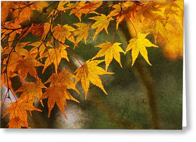 Fall Yellow Greeting Cards - Leaf Zen B Greeting Card by Rebecca Cozart