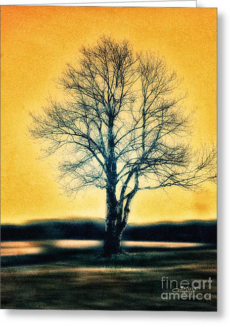 Winter Photos Greeting Cards - Leafless Tree Greeting Card by Jutta Maria Pusl