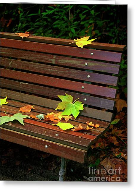 Leafs In Bench Greeting Card by Carlos Caetano
