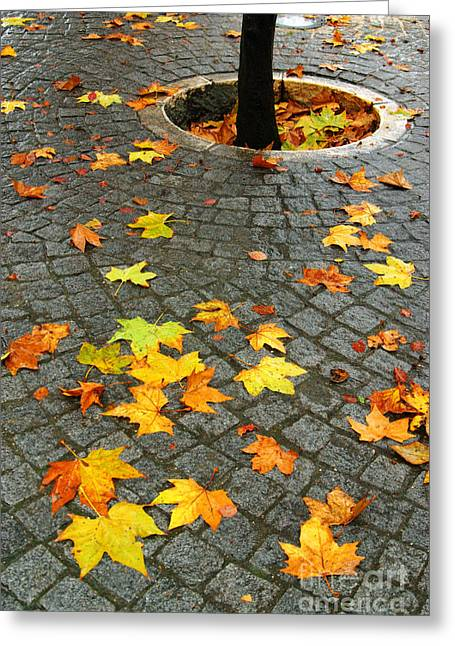 Wet Floor Greeting Cards - Leafs in Ground Greeting Card by Carlos Caetano