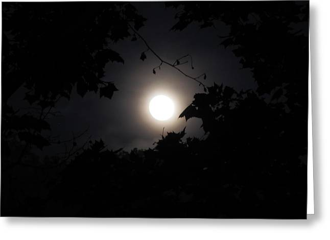 Shane Brumfield Greeting Cards - Leafy Moon Greeting Card by Shane Brumfield