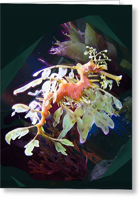 Recently Sold -  - Aquarium Fish Greeting Cards - Leafy Sea Dragon Greeting Card by Ginny Schmidt