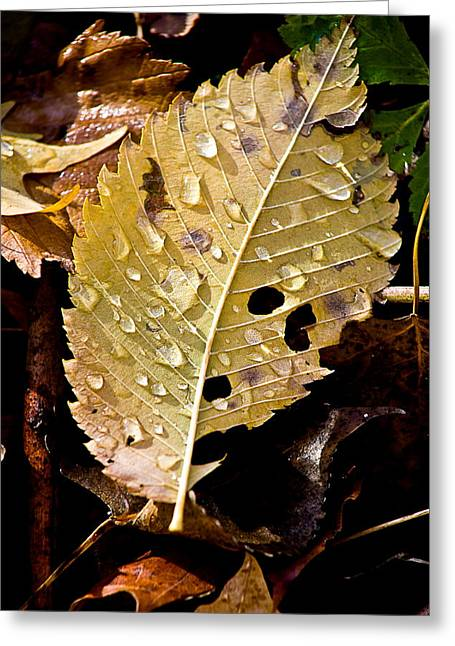 Fallen Leaf On Water Greeting Cards - Leafy Tears Greeting Card by Burney Lieberman