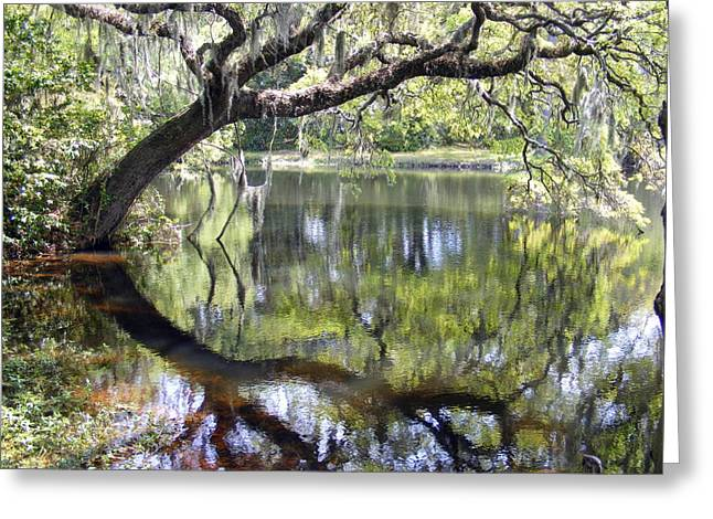 Pond.  Greeting Cards - Lean on Me at the Birthplace of America Greeting Card by Elena Tudor