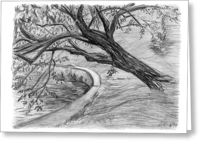 Organic Drawings Greeting Cards - Leaning Tree Greeting Card by Adam Long