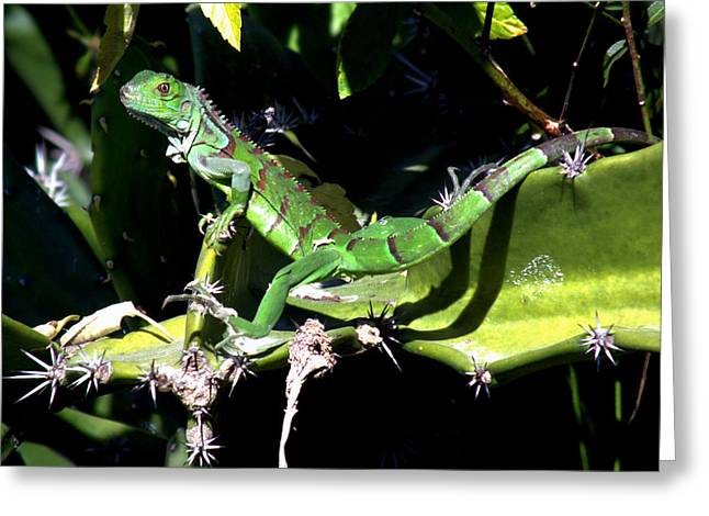 The Nature Center Greeting Cards - Leapin Lizards Greeting Card by Karen Wiles