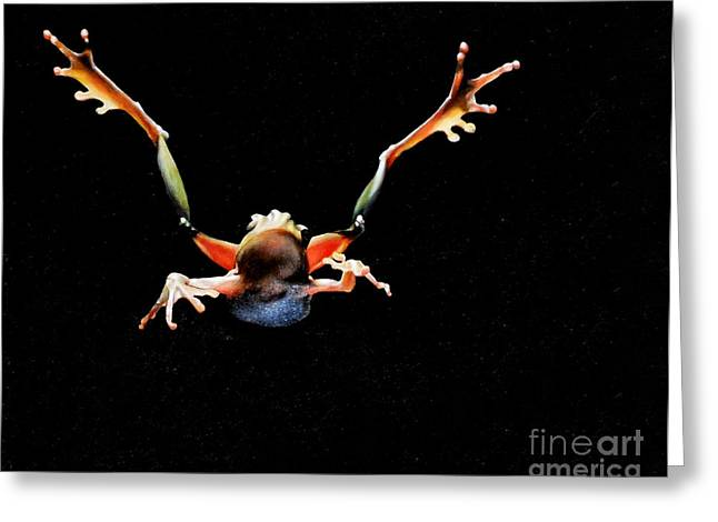 Best Sellers -  - Flying Frog Greeting Cards - Leaping Frog Greeting Card by Michelle Iglesias