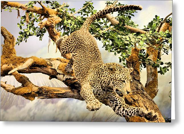 Leaping Leopard Greeting Card by Kristin Elmquist