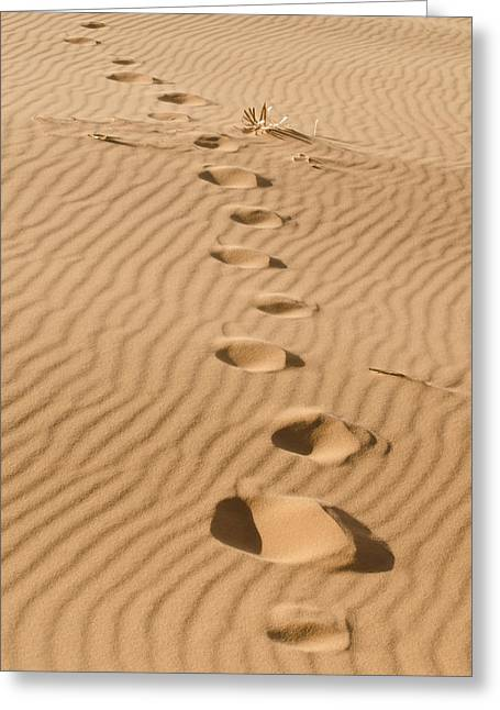 Old Fence Post Greeting Cards - Leave only Footprints Greeting Card by Heather Applegate