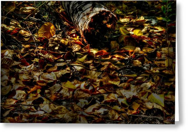 Prescott Greeting Cards - Leaves and Downed Tree Greeting Card by Aaron Burrows
