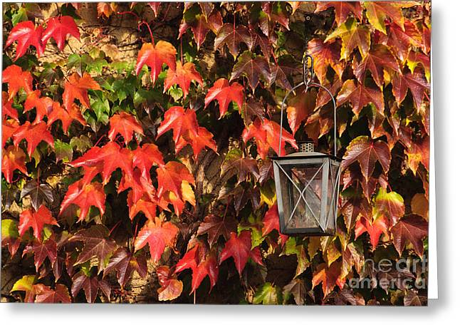 Leaves and lantern Greeting Card by Katja Zuske