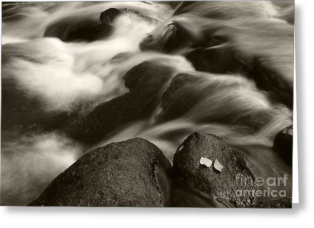 All Blacks Greeting Cards - Leaves and Waterfall Greeting Card by Timothy Johnson