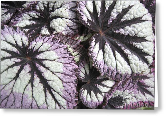 Leaves Greeting Card by Ann Powell