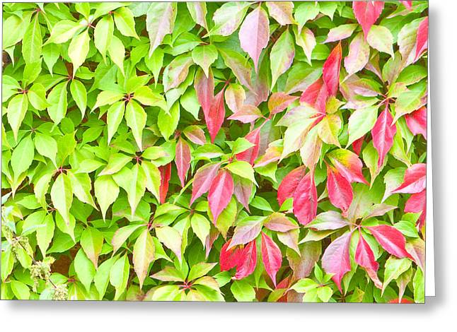 Leaves Background Greeting Card by Tom Gowanlock