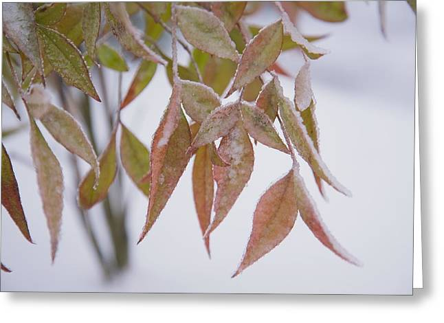Ground Level Greeting Cards - Leaves Greeting Card by Craig Tuttle