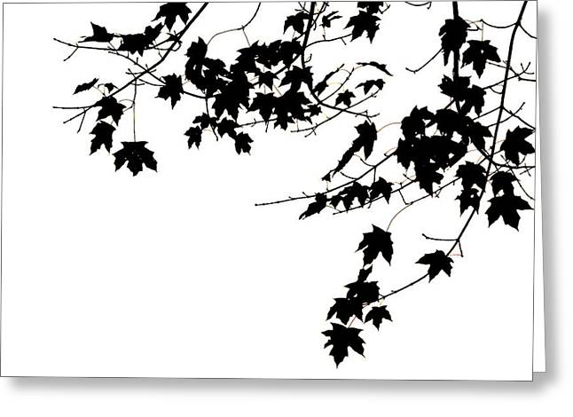Tasteful Photographs Greeting Cards - Leaves Greeting Card by Darren Fisher