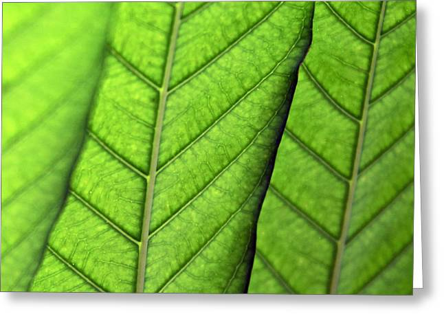 Kelly Digital Art Greeting Cards - Leaves Greeting Card by Glennis Siverson