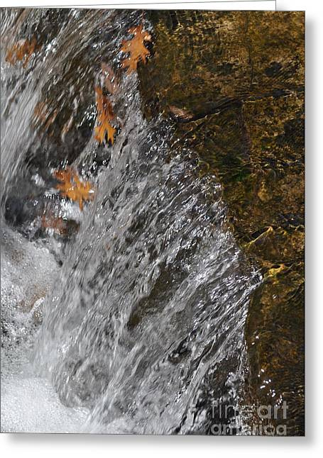 Best Sellers -  - Cheekwood Greeting Cards - Leaves in the water Greeting Card by Denise Ellis