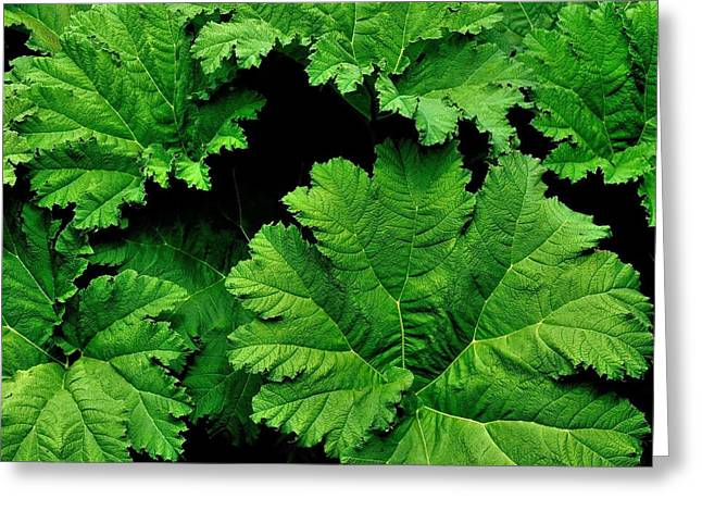 Leaves Greeting Card by Kathy King