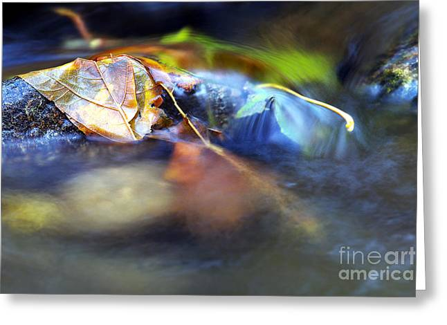 Water In Creek Greeting Cards - Leaves on Rock in Stream Greeting Card by Sharon  Talson