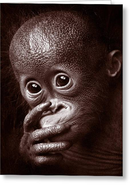 Orangutan Greeting Cards - Leela Greeting Card by Wade Aiken
