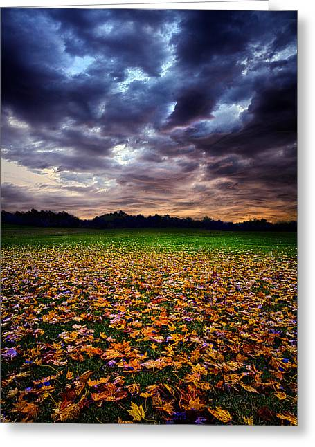 Red Leaves Greeting Cards - Left Greeting Card by Phil Koch