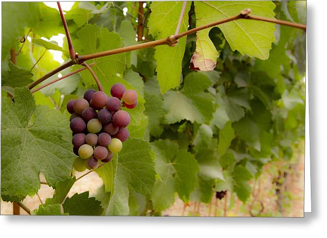 Leftover Grapes Greeting Card by Jean Noren