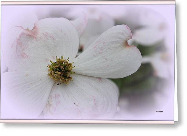 Betty Northcutt Greeting Cards - Legend Of The Dogwood Greeting Card by Betty Northcutt