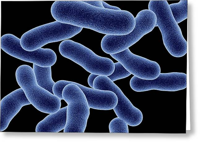 Microbiology Greeting Cards - Legionnaires Disease Bacteria Greeting Card by Pasieka
