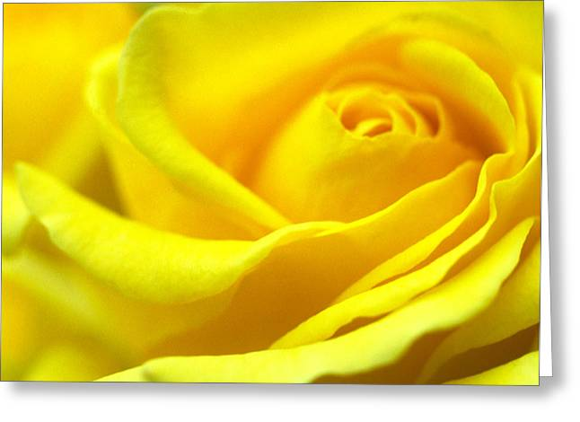 Yellow Flowers Framed Prints Greeting Cards - Lemon Yellow Rose Greeting Card by Kathy Yates