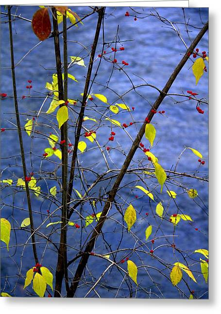 Indiana Rivers Photographs Greeting Cards - Lemonettes Greeting Card by Ed Smith