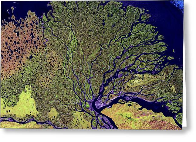 Lena Greeting Cards - Lena River Delta, Russia Greeting Card by NASA / Science Source