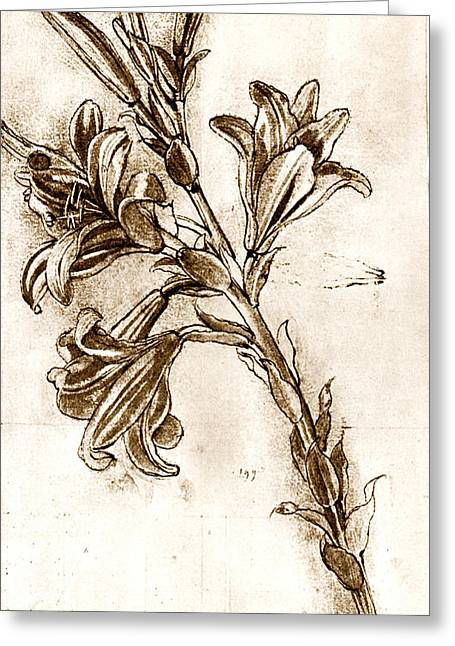 Pen And Ink Drawing Greeting Cards - Leonardo Da Vincis Lilies. Greeting Card by Sheila Terry