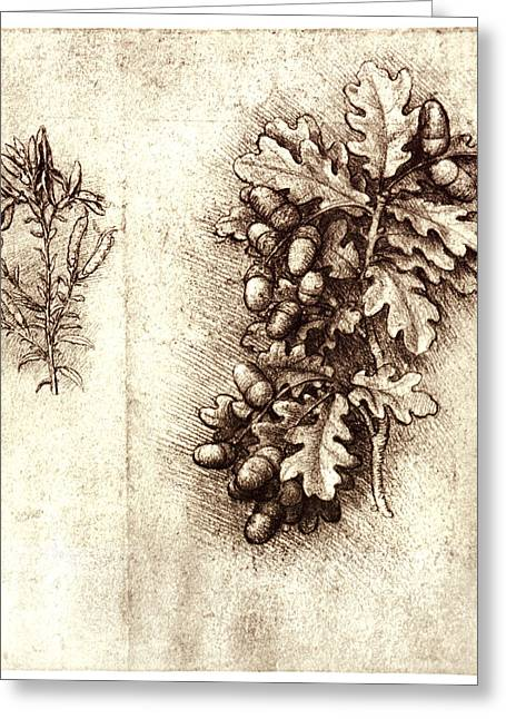 Acorn Greeting Cards - Leonardo Da Vincis Oak Leaves And Acorns Greeting Card by Sheila Terry