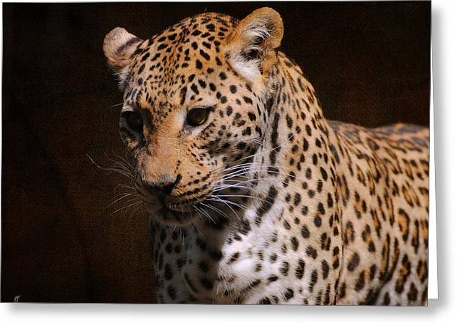 Wildcats Greeting Cards - Leopard I Greeting Card by Jai Johnson