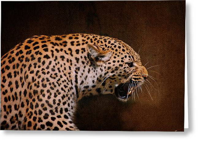 Wildcats Greeting Cards - Leopard II Greeting Card by Jai Johnson