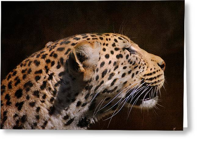 Wildcats Greeting Cards - Leopard IV Greeting Card by Jai Johnson