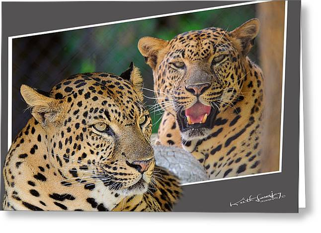 Oof Greeting Cards - Leopard OOF Greeting Card by Keith Lovejoy