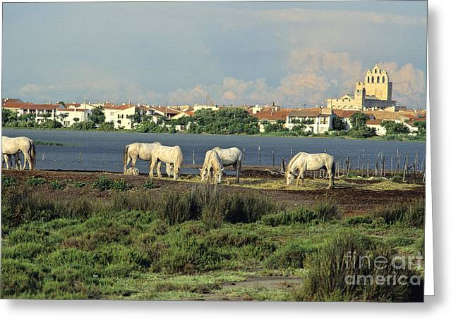 Horse Photographs Greeting Cards - Les Saintes Marie de la Mer. Camargue. Provence. Greeting Card by Bernard Jaubert