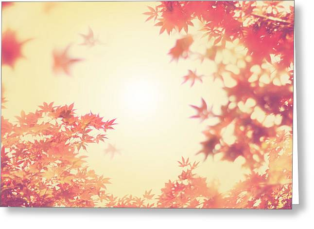 Autumn Prints Photographs Greeting Cards - Let It Fall Greeting Card by Amy Tyler