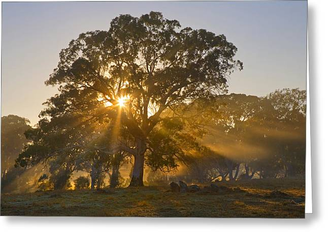 Heavenly Sunrise Greeting Cards - Let there be Light Greeting Card by Mike  Dawson