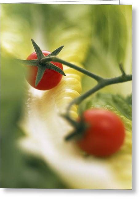 Lettuce Greeting Cards - Lettuce And Tomatoes Greeting Card by Sheila Terry