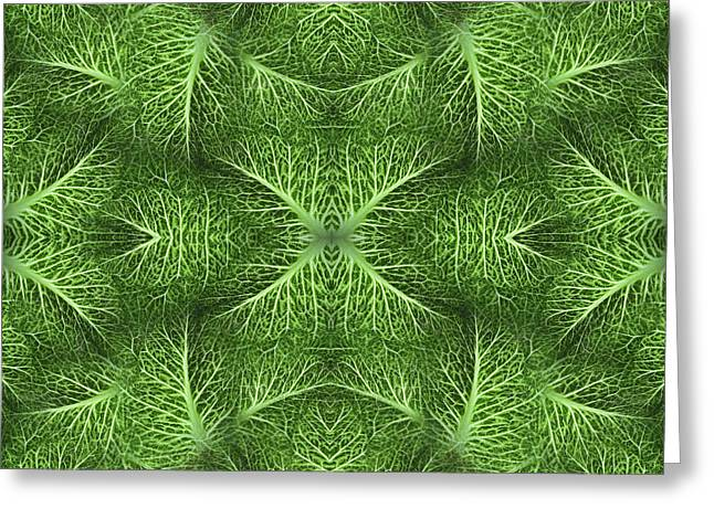 Tranzitionz Greeting Cards - Lettuce Live Green  Greeting Card by Sue Duda