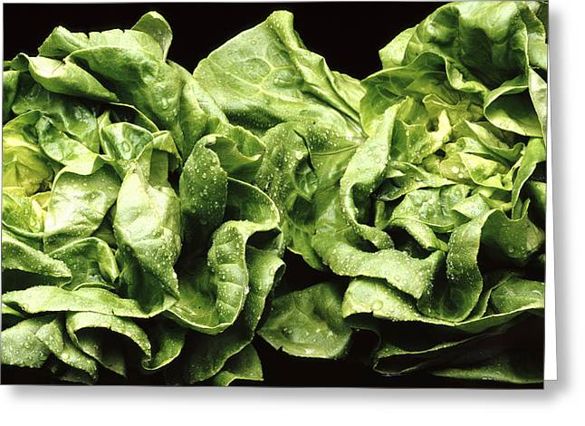 Lettuce Greeting Cards - Lettuces Greeting Card by Victor De Schwanberg