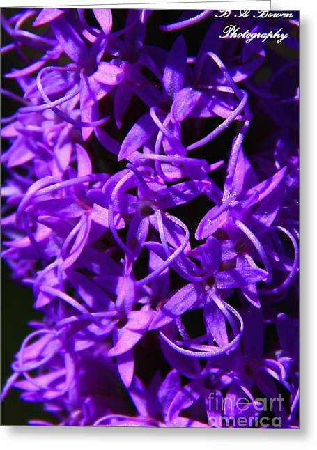 Oscar Scherer State Park Greeting Cards - Liatris Greeting Card by Barbara Bowen