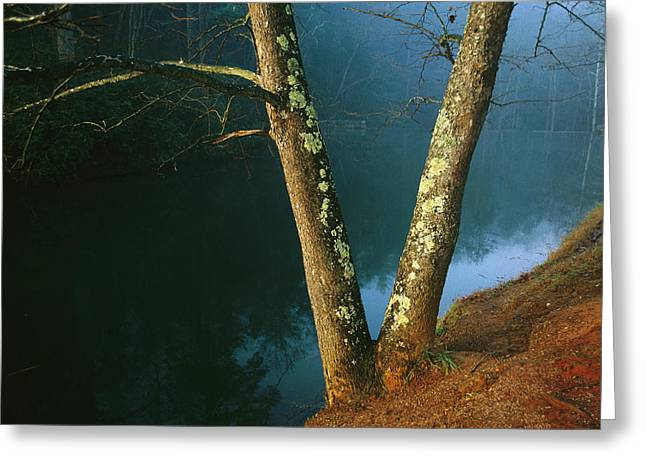 Dogwood Lake Greeting Cards - Lichen-covered Dogwood Trees Greeting Card by Raymond Gehman